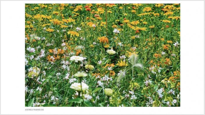 Blumewiese